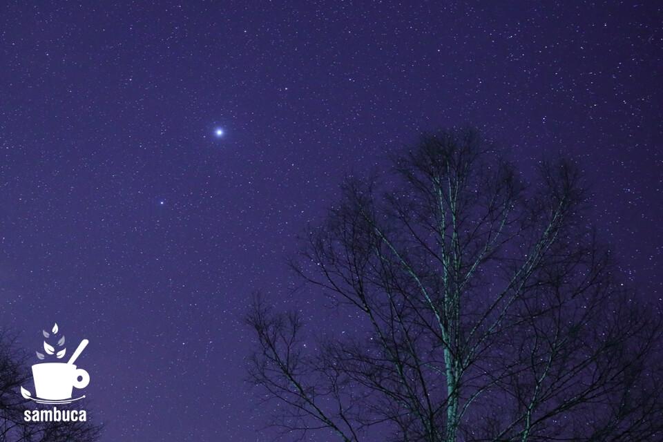 星空とシラカバ