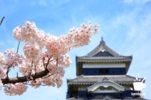 松本城のソメイヨシノ