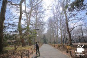 冬のプラタナスの並木、林試の森公園にて