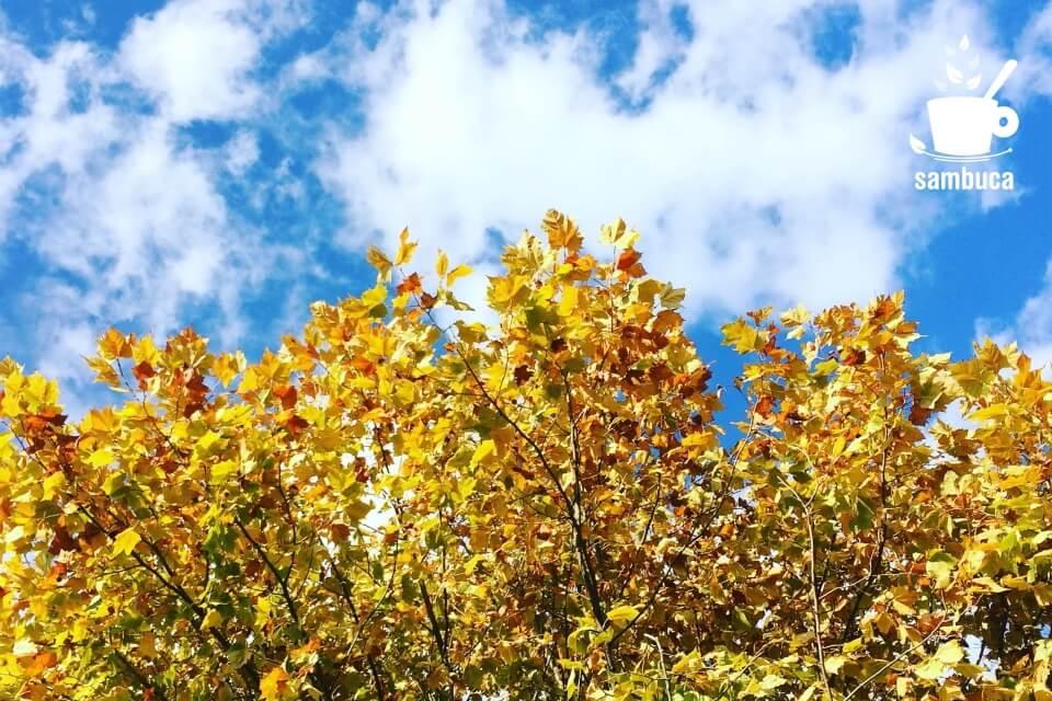 プラタナスの秋