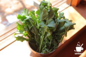 北関東の伝統野菜、かき菜