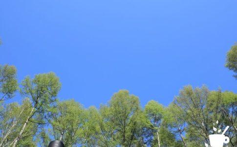 新緑のカラマツ林