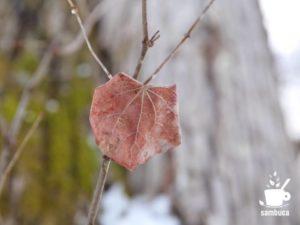 冬まで残ったカツラの葉