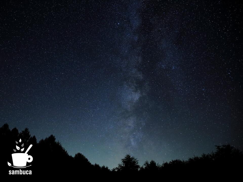 カラマツ林と星空