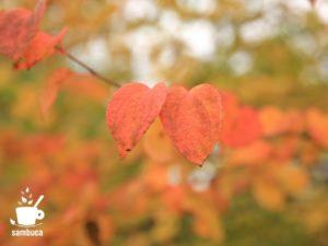ピンク色のカツラの葉