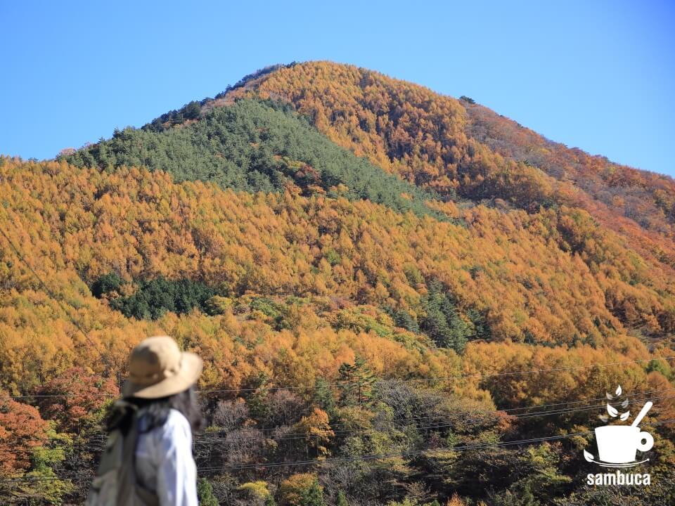 黄葉のカラマツ林の山