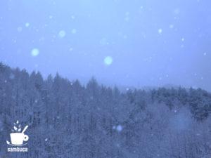雪のカラマツ林