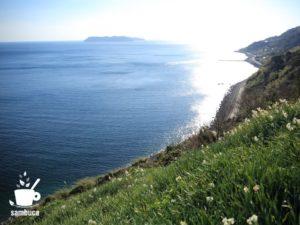 灘黒岩水仙郷の眺め
