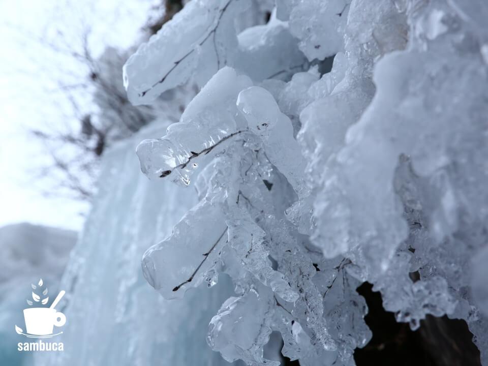 ミヤマハンノキの冬芽