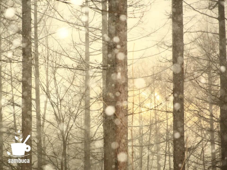 雪降るカラマツ林