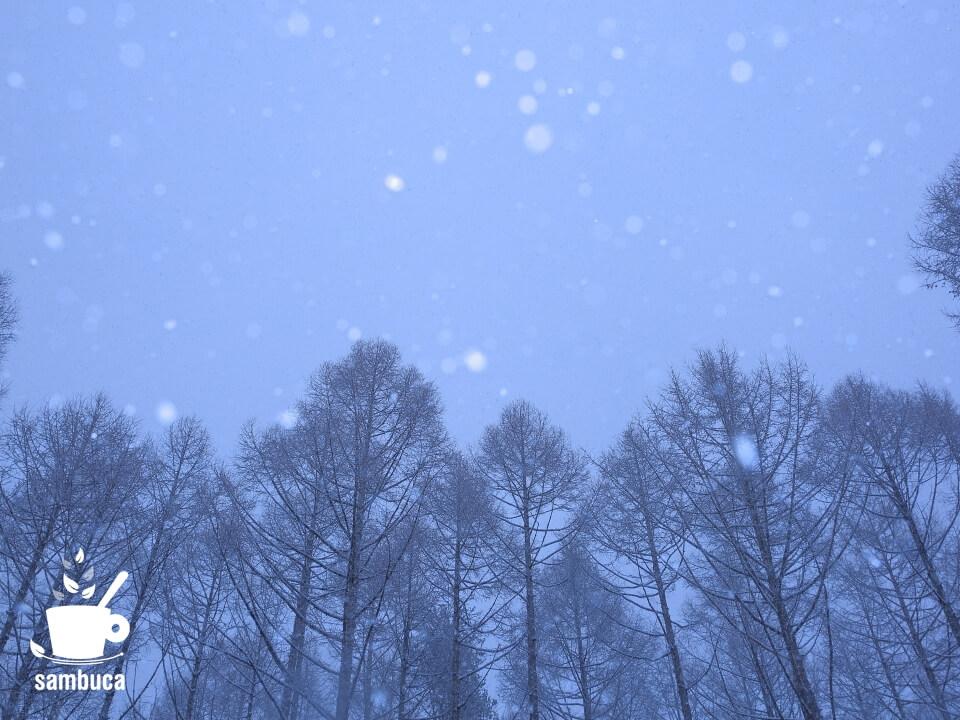 カラマツ林に降る雪