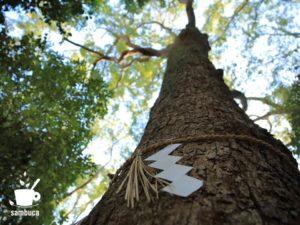 生田の森の御神木