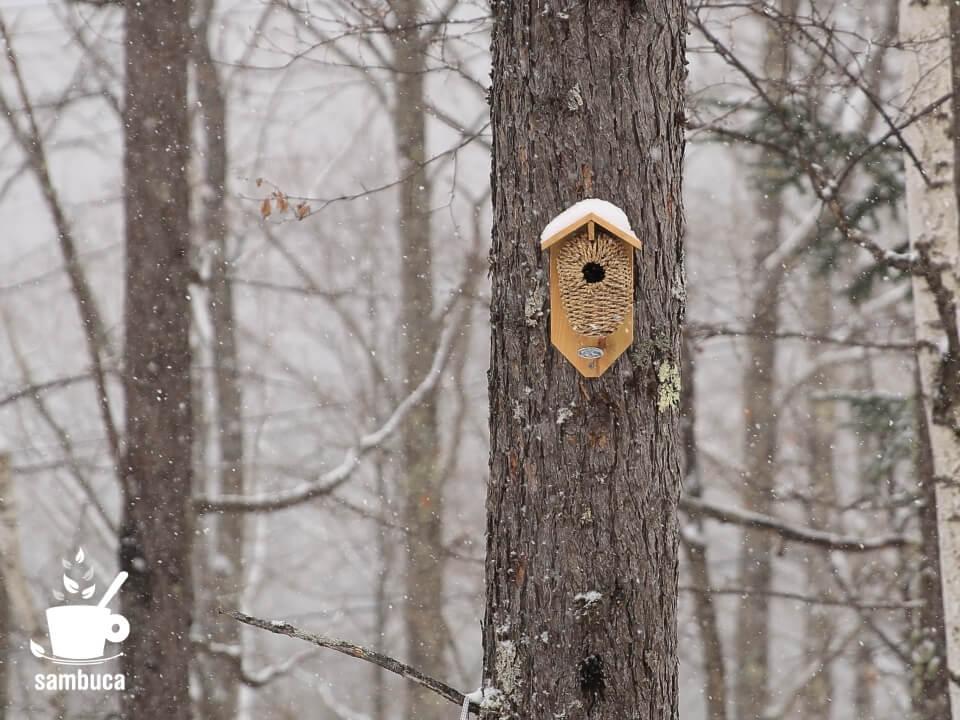 カラマツの木に取り付けた巣箱