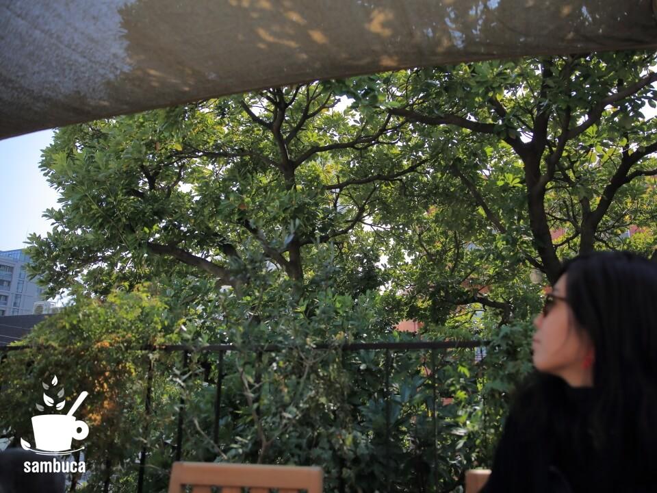Les Grands Arbres(レ・グラン・ザルブル)の屋上テラスからタブノキを眺める