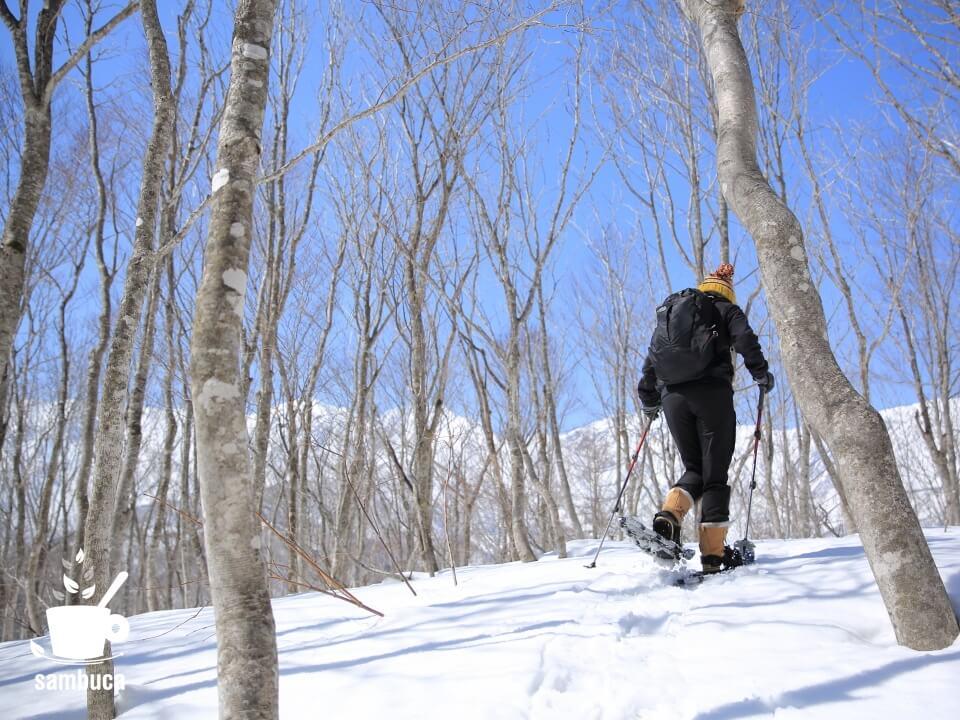 「ねずこの森」スノーシューハイキング終盤