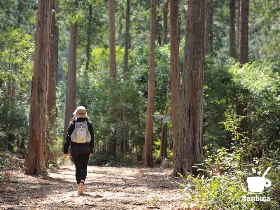 速水林業の森