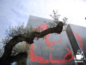 Ginza Sony Park(銀座ソニーパーク)のオリーブの木