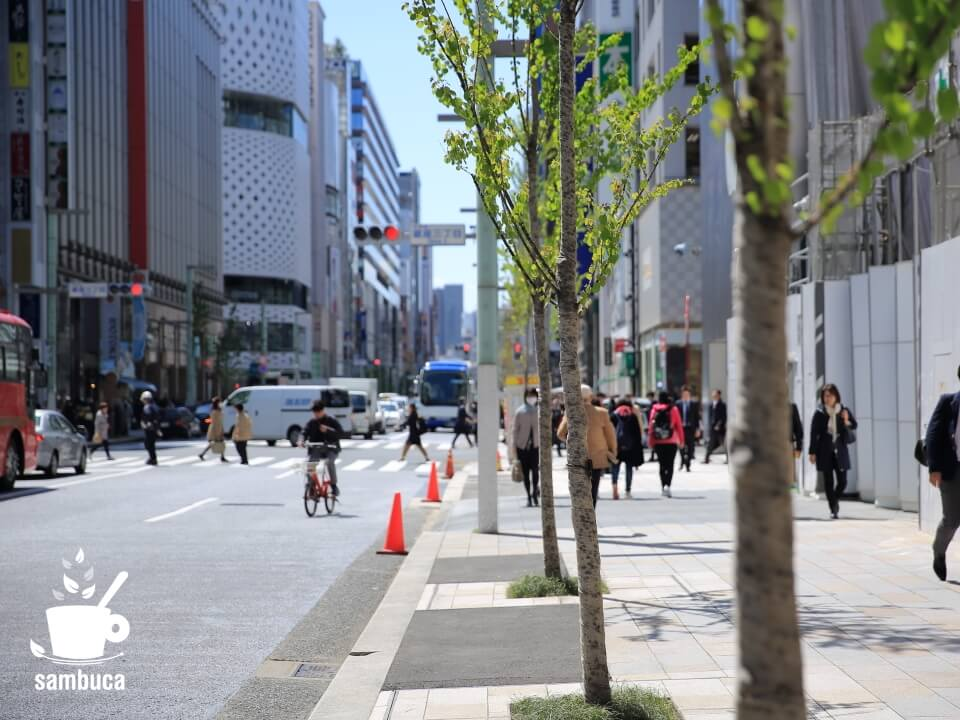銀座通り(中央通り)の街路樹・カツラ