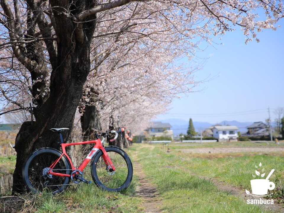 常念道祖神、国営アルプスあづみの公園に向かう途中の桜並木と3Tバイク