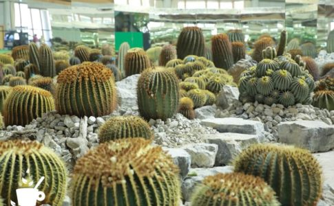 信州花フェスタ2019「そら植物園・西畠清順による信州産サボテンのインスタレーション」