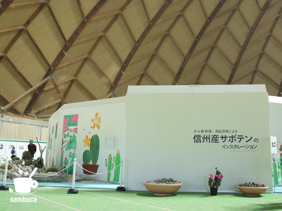 そら植物園・西畠清順による信州産のサボテンのインスタレーション
