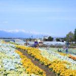 信州花フェスタ2019「北アルプスと花の丘」