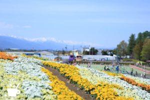 「北アルプスと花の丘」から北アルプス方面を望む
