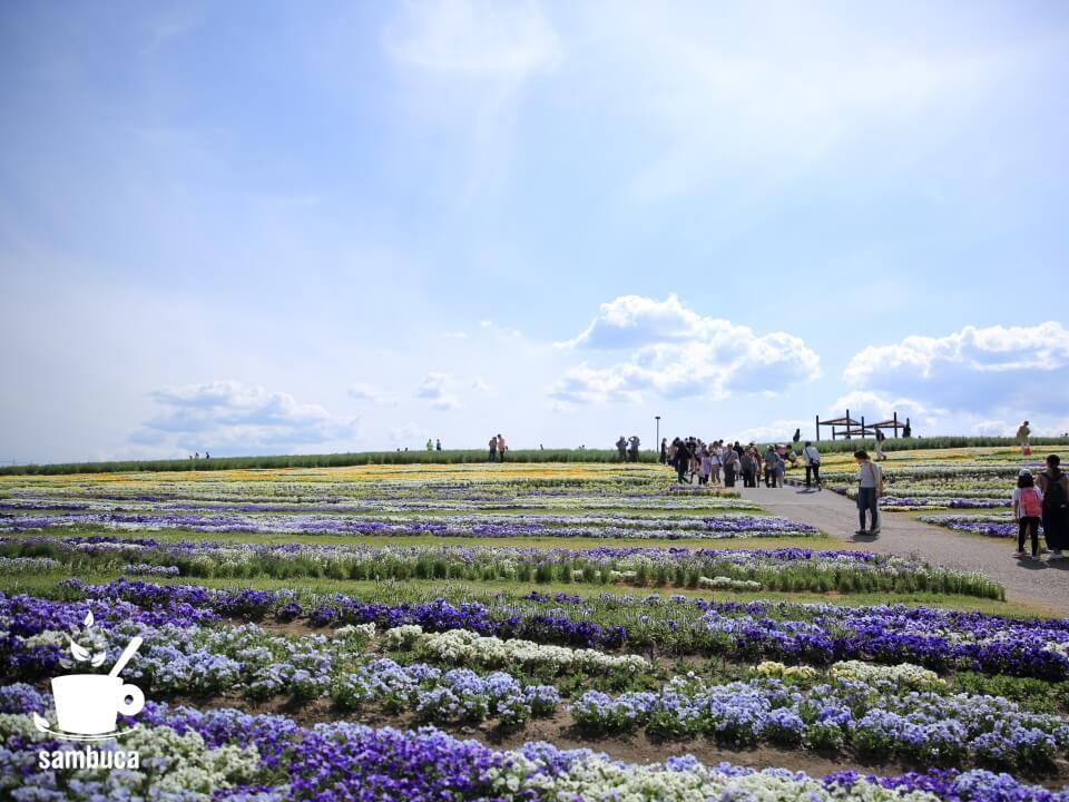 「北アルプスと花の丘」