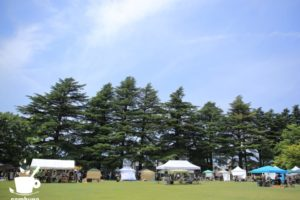 あがたの森公園のヒマラヤスギ(芝生広場から)