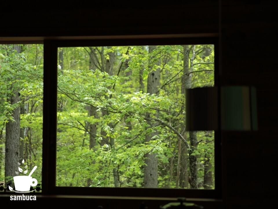 窓から見える新緑