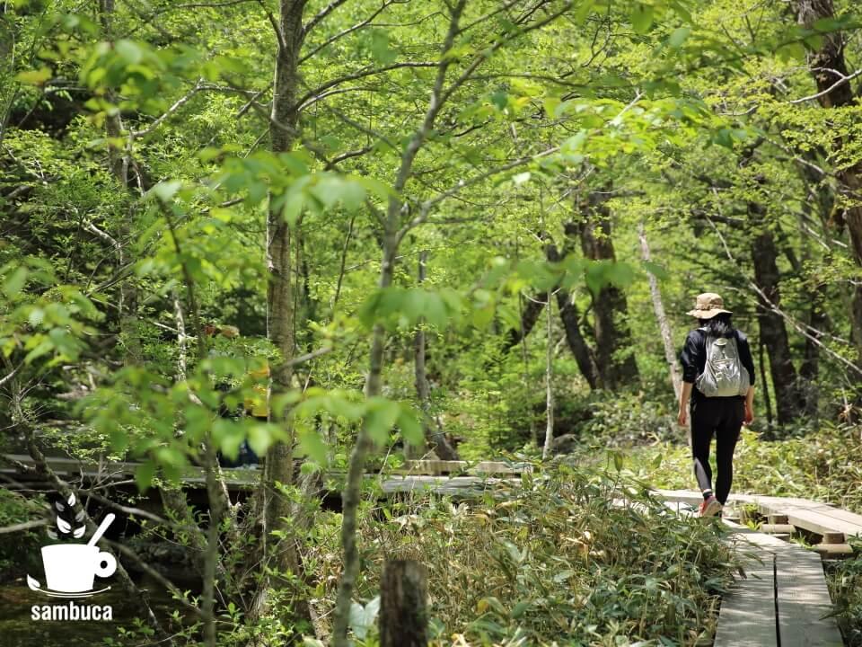 新緑の中の木道を歩きます