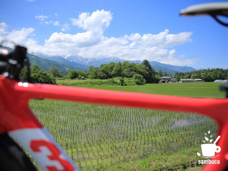 水田の向こうに白馬三山