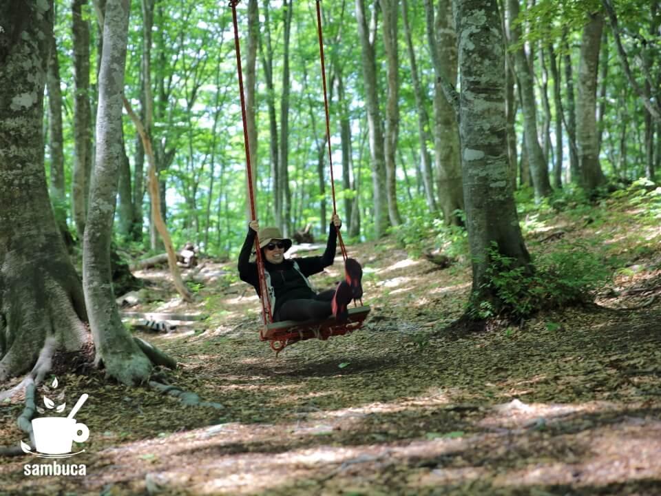 「ブナの森パーク」のブランコ