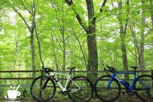 ミズナラの森の中を3Tのバイクで