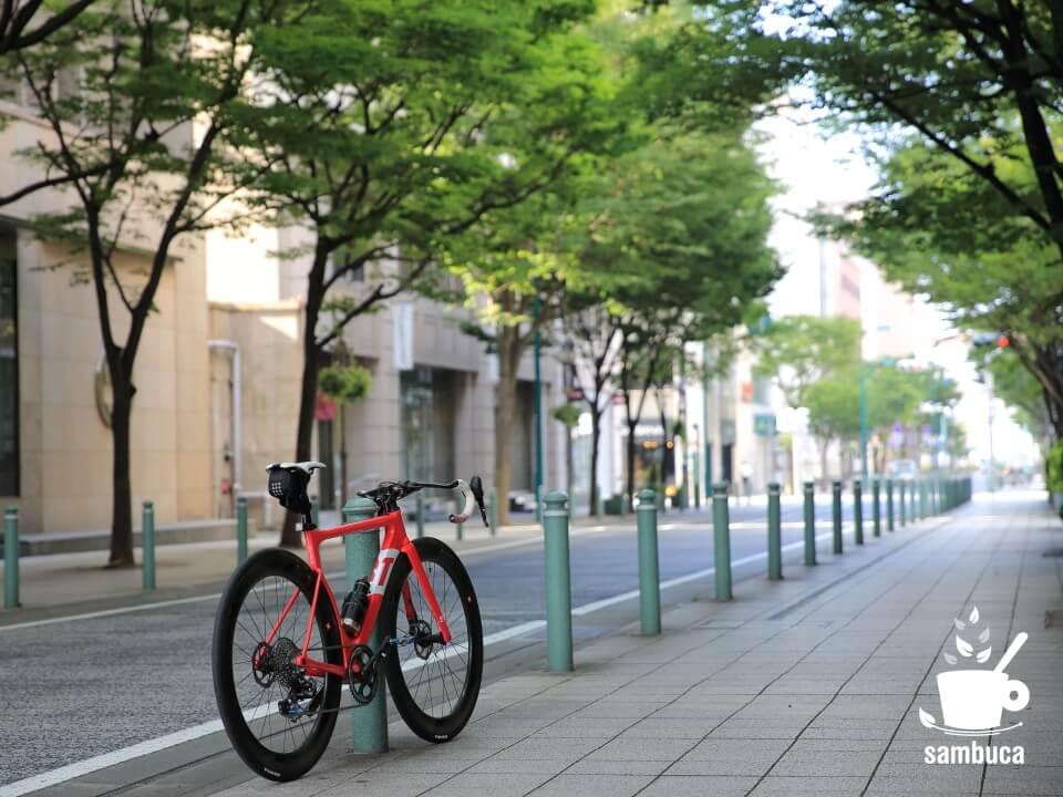 ケヤキ並木と3Tのロードバイク
