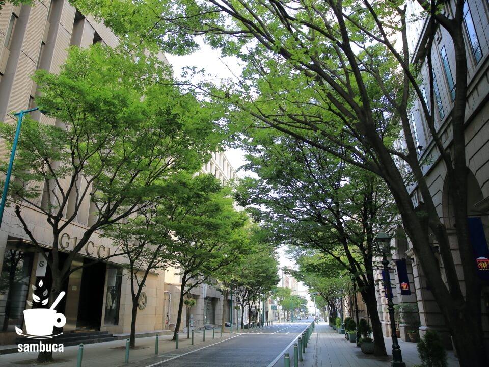 ケヤキ並木の緑のトンネル(神戸・旧居留地)
