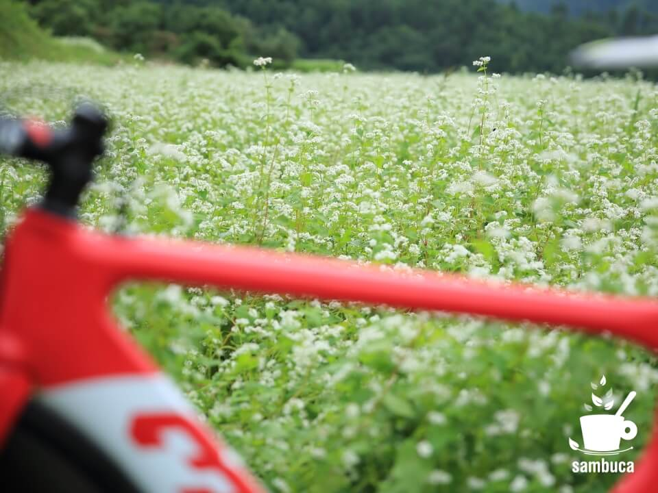 3Tのロードバイクの向こうに蕎麦畑