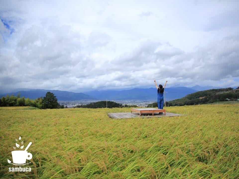 Satoyama villa DENの水田