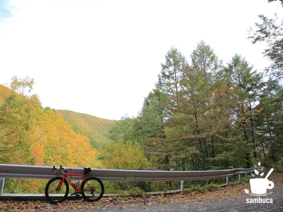 黄葉の風景とカラマツ、3Tのロードバイク