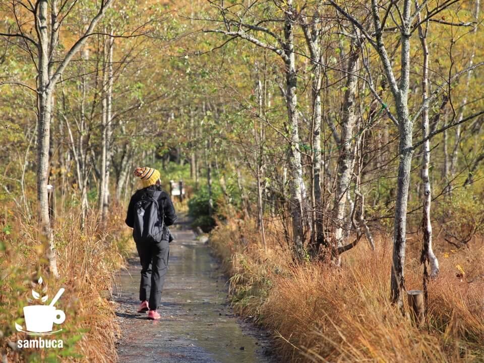 大正池から田代橋へ向かう途中