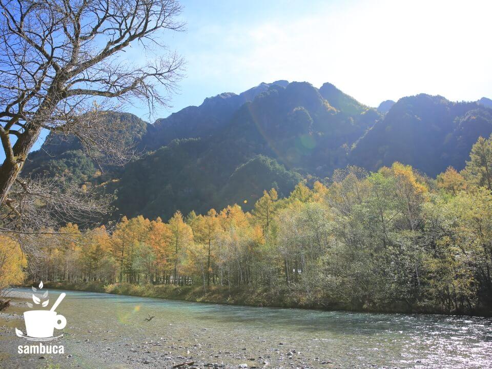 梓川とカラマツ林
