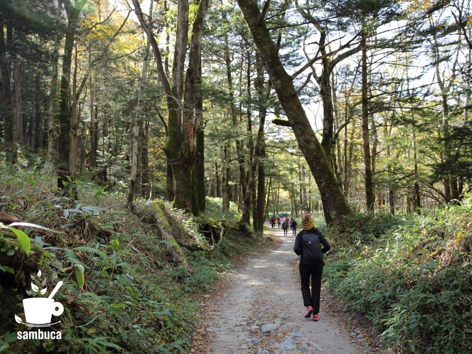 左岸の林道