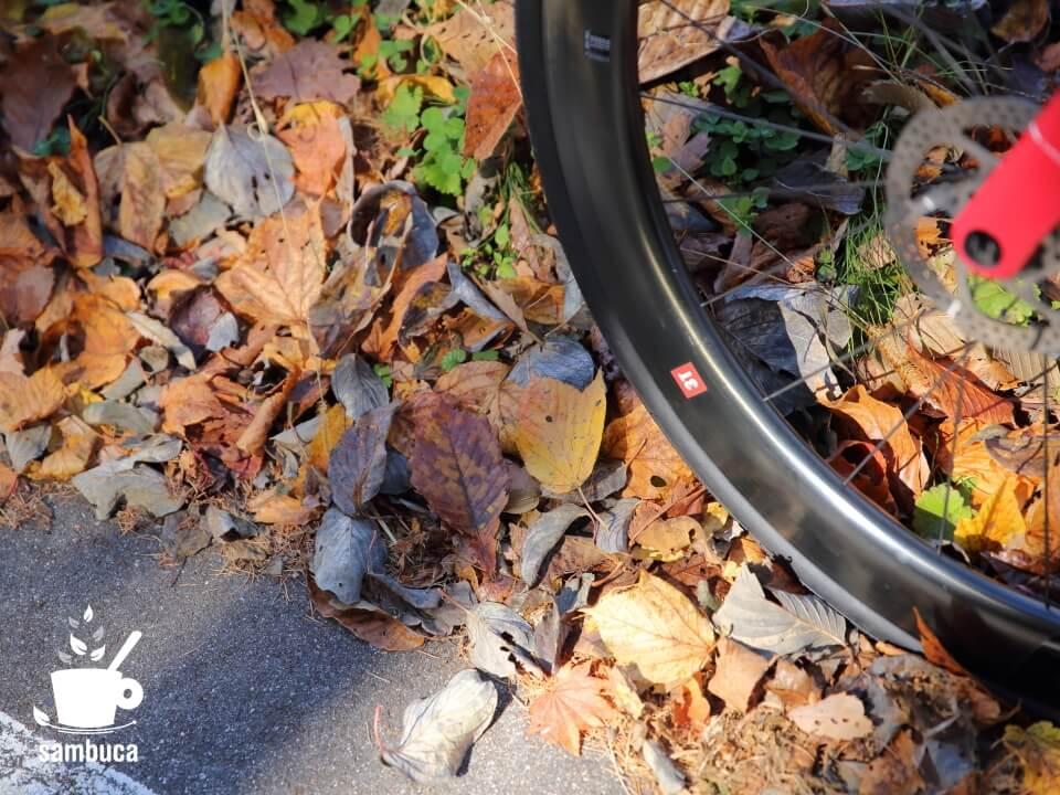 道路脇の落ち葉