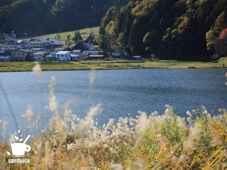 中綱湖畔のススキの風景