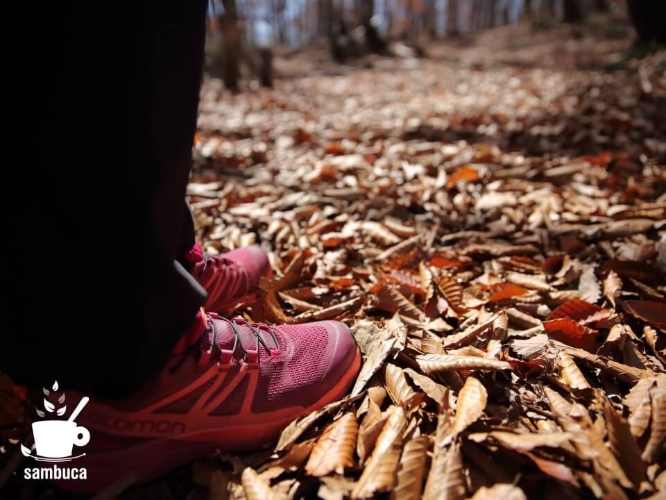 フカフカのブナの落ち葉の上を歩きます