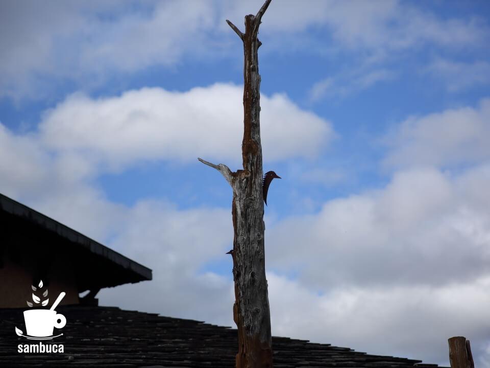 屋根から突き出た柱