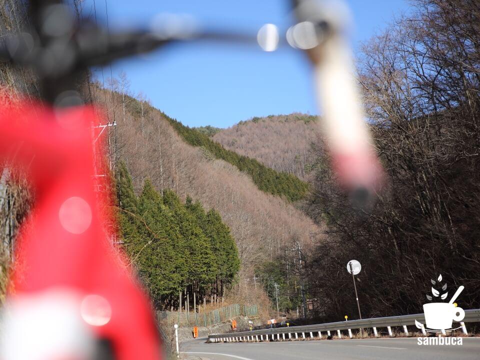 国道361線から見えるカラマツ林