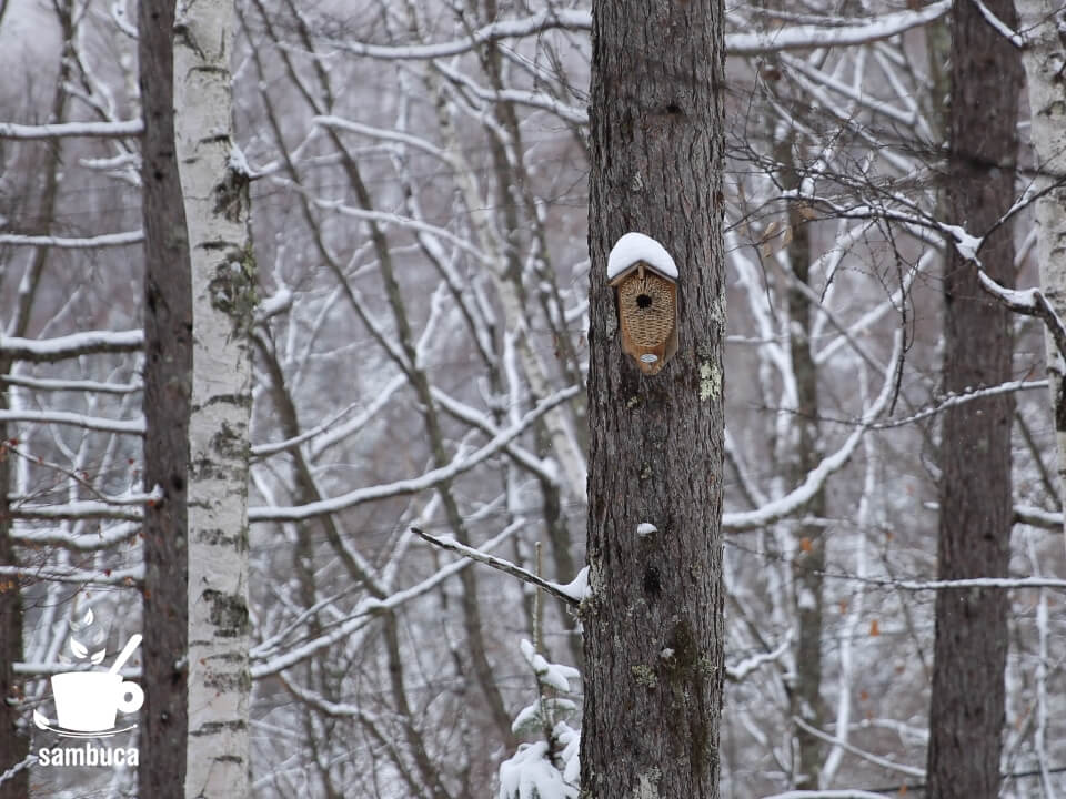 雪を被った鳥の巣箱