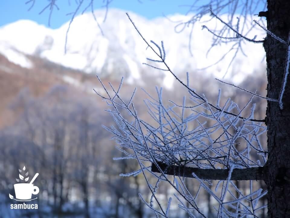 霧氷で白くなったカラマツの枝