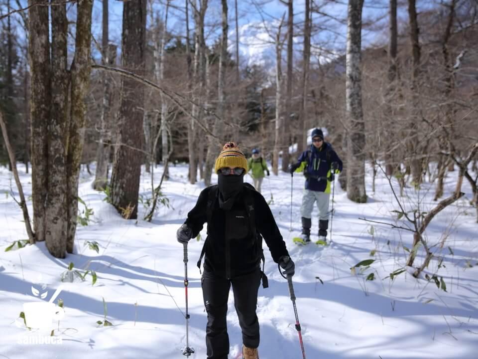 雪の樹林帯を進みます